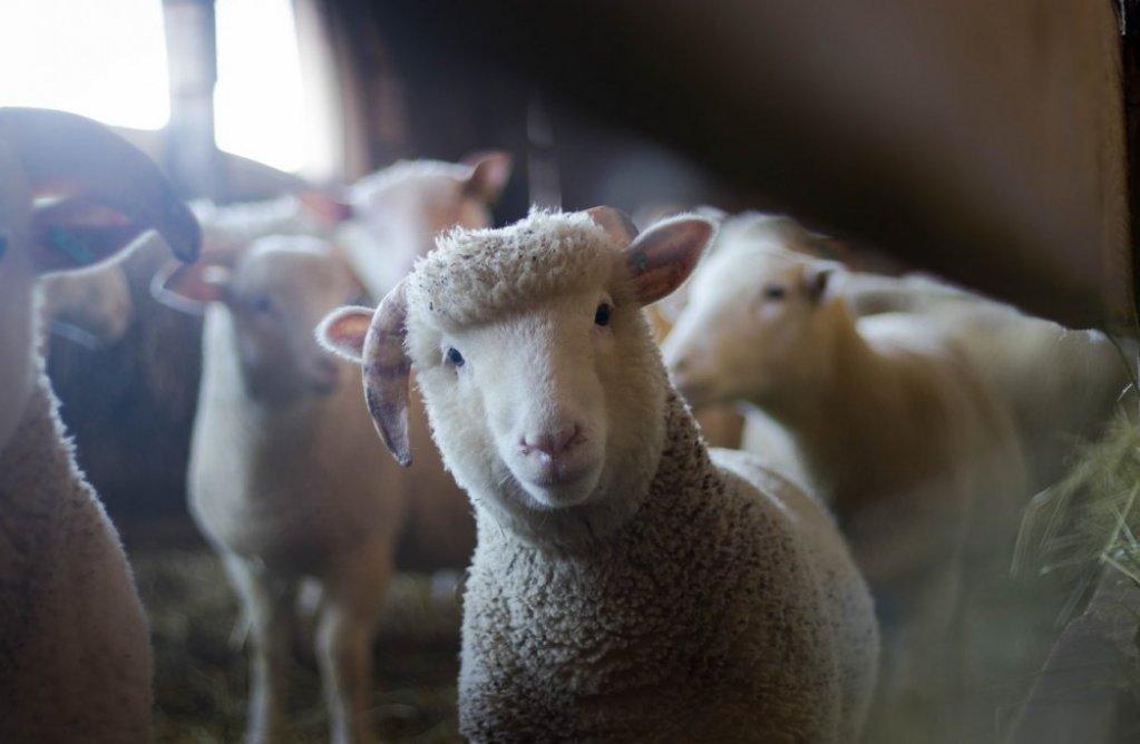 Dotarile unui fermier modern – de ce merita investitia intr-o masina de tuns animale si alte produse de la Superfarmland