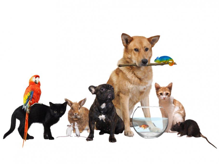 5 motive pentru a adopta un animal de companie: Avantaje si Beneficii