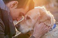 4 lucruri simple care iti fac animalul de companie fericit