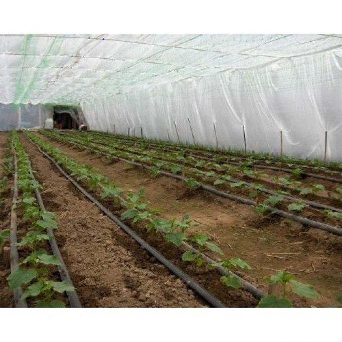 Care sunt avantajele unei sere acoperite cu o folie pentru solarii?