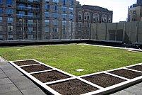 Cea mai inovativa metoda de a hidroizola un acoperis de terasa: cu plante verzi!