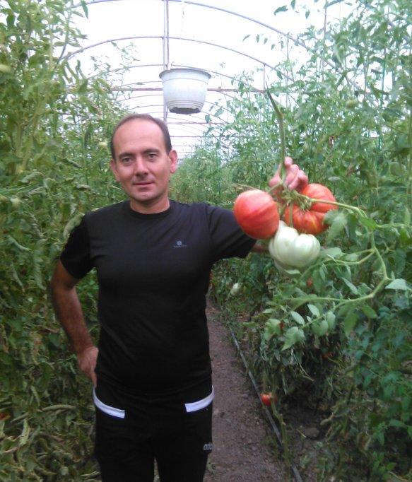 Sătul să vândă roșii naturale la 60 de bani intermediarilor, un mic producător din Timiș alege să dezvolte relații directe cu consumatorii!
