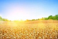 Cum se depoziteaza produsele agricole?