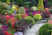 Cum alegem culorile vegetatiei in gradina