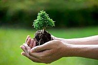 Cum plantam un copac