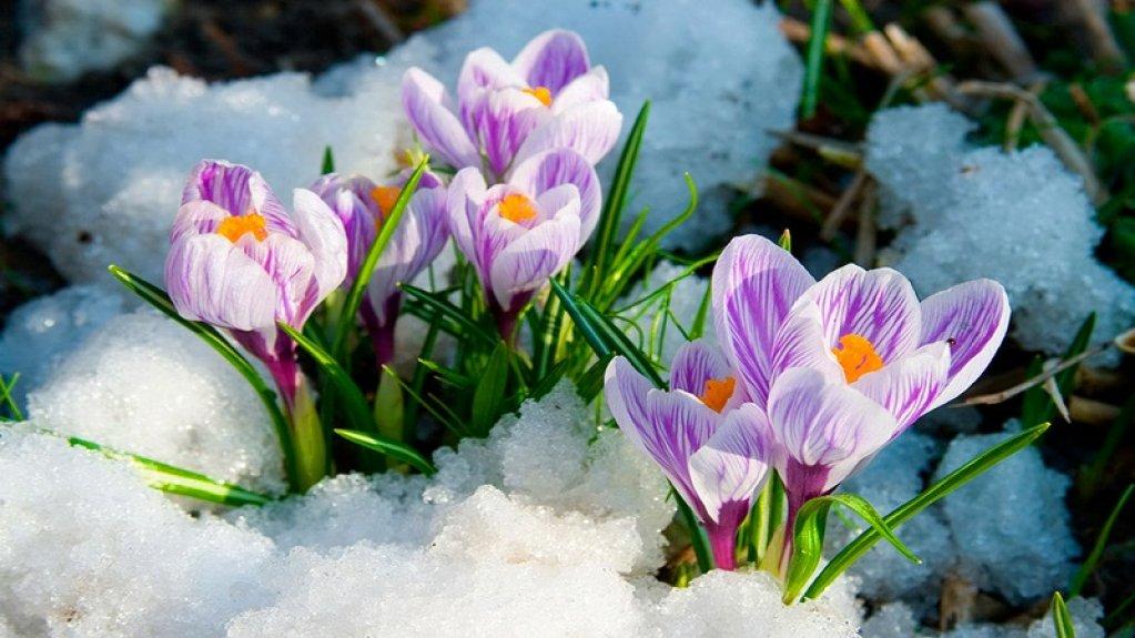 8 imagini cu Care sunt primele flori de primăvară din grădină?
